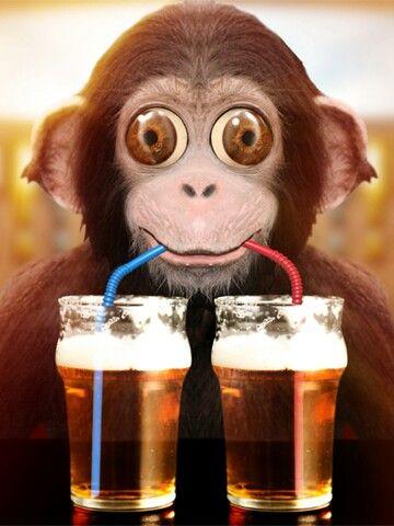 Monkeys Drinking Beer Images