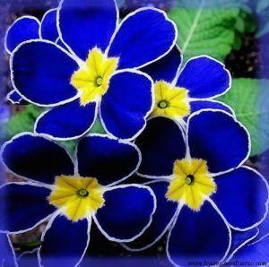nombres de flores exoticas del mundo