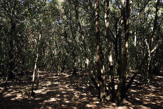 Dove fare un picnic in Toscana: 5 proposte per un pranzo al sacco.
