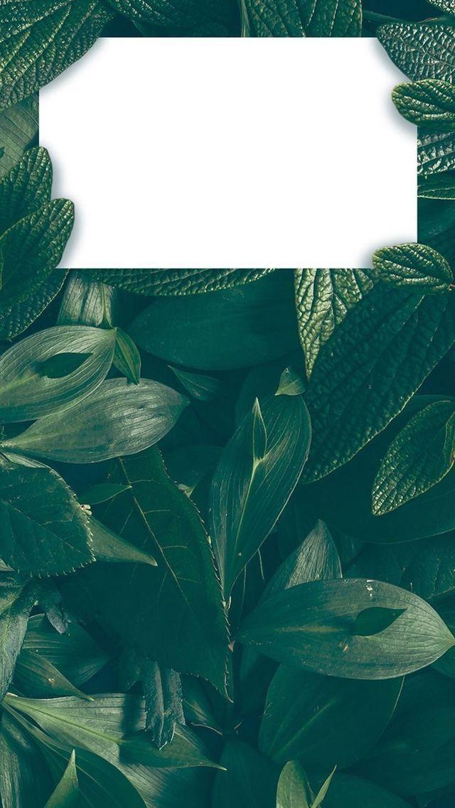 Natur Hintergrundbilder für iPhone – Aylin