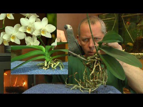 BAUHAUS TV - Produktvideo: Seramis Orchideen Spezial Substrat - YouTube