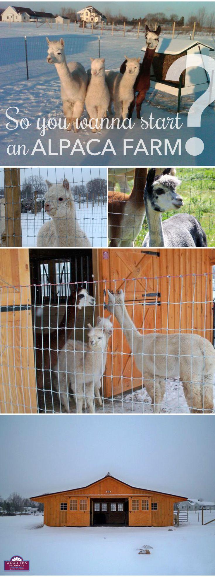 Alpacas with a Wood-Tex Horse Barn