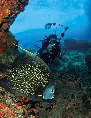 TOP 10 DIVE SPOTS IN PUERTO RICO.-  CAYO RATON (Culebra)    Arguably the fishiest dive in Puerto Rico and one of the fishiest in the entire Caribbean, this semicircular reef, starts flat and then plunges down to 60 feet. Swarms of little to medium-size life here abound, from queen angelfish and butterflyfish to parrotfish and horse-eye jacks. Check the sand for camouflaged peacock flounders. And did we mention visibility can sometimes top 100 feet here? RECOMMENDED AS AN INTERMEDIATE DIVE.