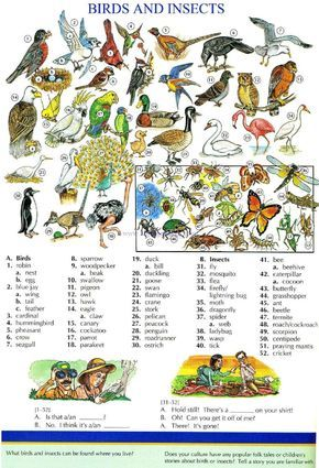 114 - BIRDS AND INSECTS - Picture Dictionary - English Study, explanations, free exercises, speaking, listening, grammar lessons, reading, writing, vocabulary, dictionary and teaching materials