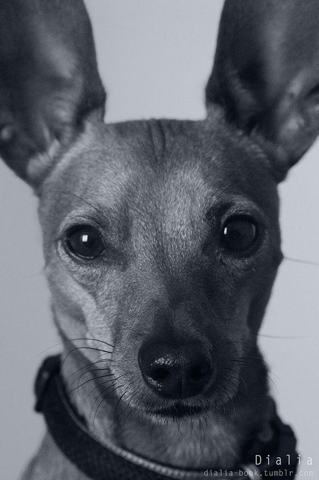 dog portrait, so cute