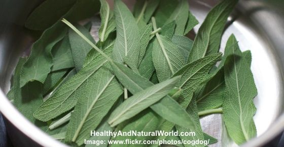 This delicious herb really packs a punch when it comes to your health – use it to prevent diabetes, boost your liver health, improve brain function and even prevent Alzheimer's.