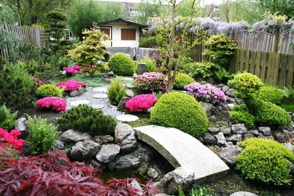 This article follows Ramon Smit who created a Japanese garden by using Japanese plants to create structure and color, such as azaleas, maples, ferns and Ginko. Ramon used the stream as his starting point, building all around it, pruning plants into ball shapes. Follow Ramon's inspiring Japanese garden creation, and perhaps you could be walking …