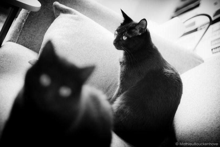 Conseil photo : photographier son animal de compagnie
