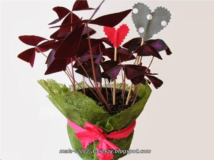Dzien Kobiet Jak Wlasnorecznie Ozdobic Kwiaty Doniczkowe Na Prezent Plants