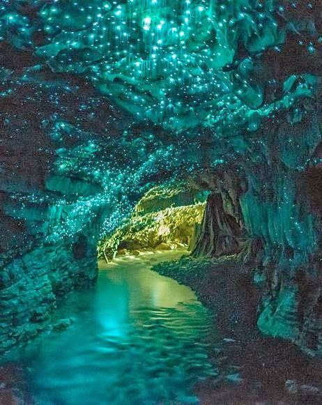 Glowworm Caves in Waitomo, New Zealand.This specific spot in the Waitomo Caves is known as the Glowworm Grotto, a place where glowworms create a starry effect on the ceilings. This species is exclusively found in New Zealand and is around the size of a mosquito.