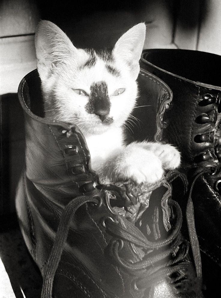 """The ORIGINAL """"Puss n' Boot"""". Kitty in German Luftwaffe Fallschirmjäger (Paratrooper) boot. Crete. GREECE. 1943 ~"""