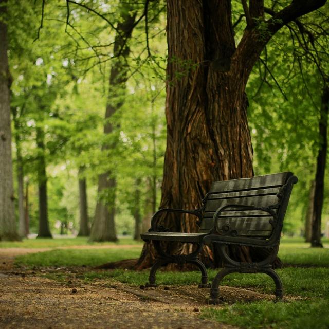 Grove bench , via Flickr