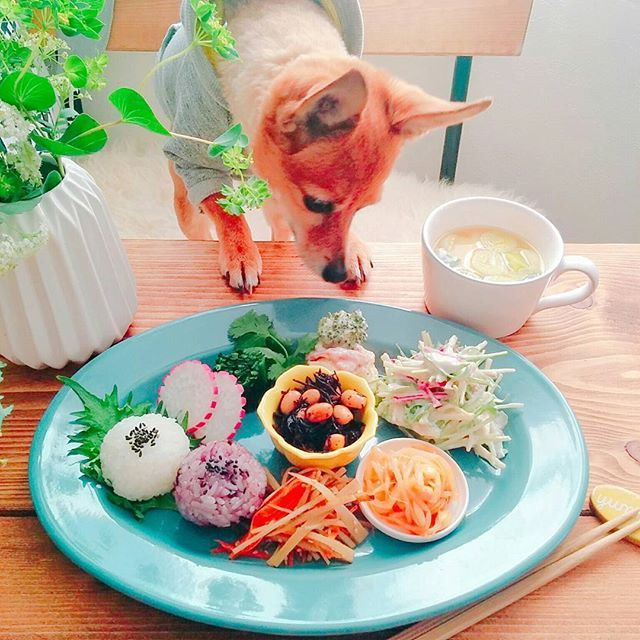 今朝は野菜プレート✩ 常備菜がたくさんあるときはこうなります♪ #2色おにぎり#レディサラダ#ホウレン草のお浸し#パクチー#ポテサラ#豆腐のパテ水菜あえ#豆もやしナムル#きんぴらごぼう#ひじき#味噌スープ#クッキングラム#朝ごはん#ワンプレート#ポメピン#愛犬#ポメラニアン#ピンシャー