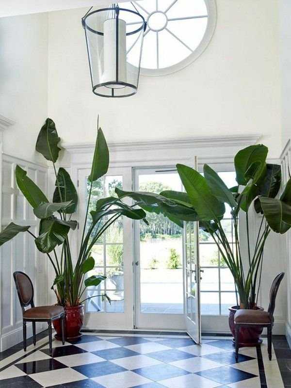 Large potted floor plants checkerboard