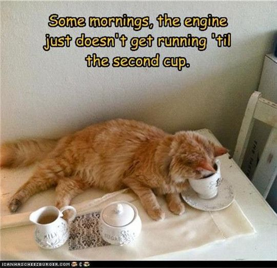 23 New Cat Memes Will Make You Feel Better On Friday.