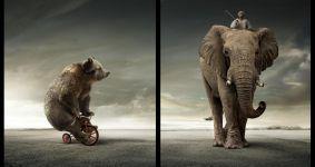 Слон и лев играют в футбол прикольная картинка фото, Слон и лев играют в футбол смешная картинка прикольное фото, смешные фото прикольные фотографии картинки животные картинка изображение юмор wallpaper