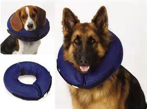 dog cone collar - Yahoo Search Results