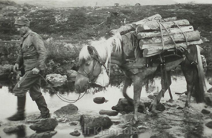 suomenhevonen+sodassa2.jpg (800×520)
