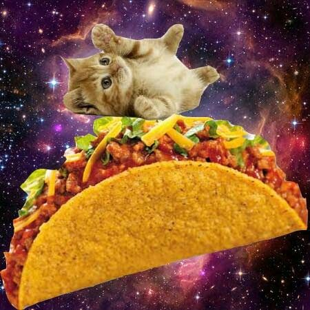 16 best cat space food images on pinterest fluffy