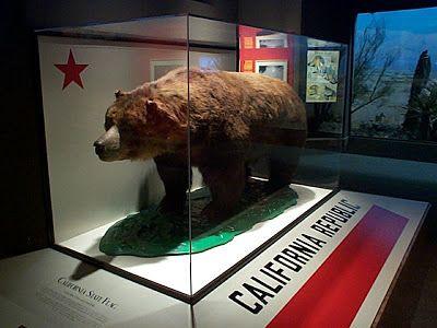 """L'ours nommé """"Monarch"""" est un grizzly de Californie (Ursus arctos californicus) une sous-espèce du grand grizzly vivant plus au nord, aujourd'hui éteinte (depuis 1922). Le dernier animal capturé vivant en 1899, qui a inspiré le dessin du drapeau que l'on peut visualiser de face en perspective, a été empaillé et est conservé depuis à l'Académie des Sciences du Golden Gate Park (Musée d'histoire naturelle """" The Califionia Academy of Sciences"""") à San Francisco"""