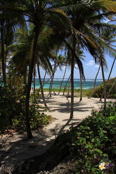 Anse Michel - Cap Chevalier #Martinique © AliZéMédia