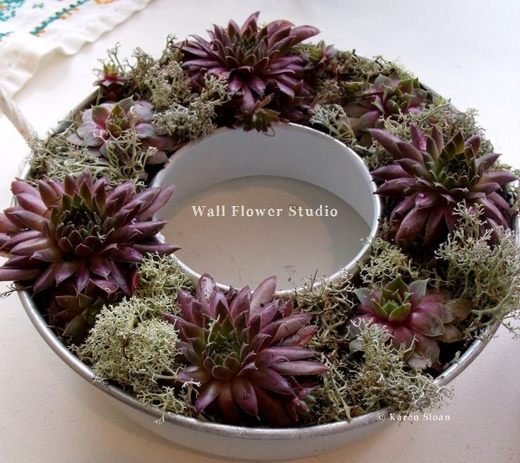 #succulent workshop at Wall Flower Studio (@KarenSloan) | Twitter