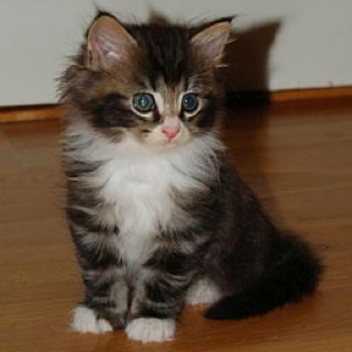 I love kitties!