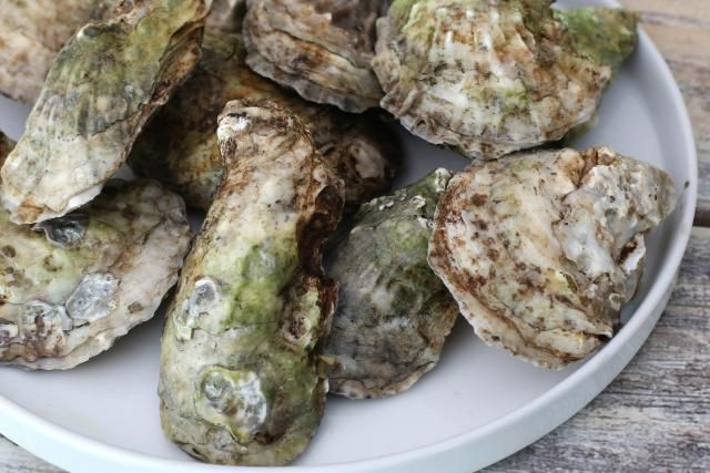 Scalloped oysters with cream, nutmeg, butter, cracker crumbs, and oysters. Baked scalloped oyster recipe.