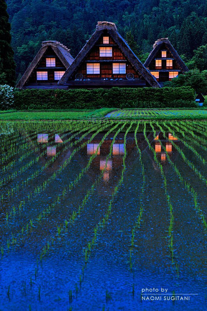 Shirakawa, Gifu, Japan | Naomi Sugitani 白川村