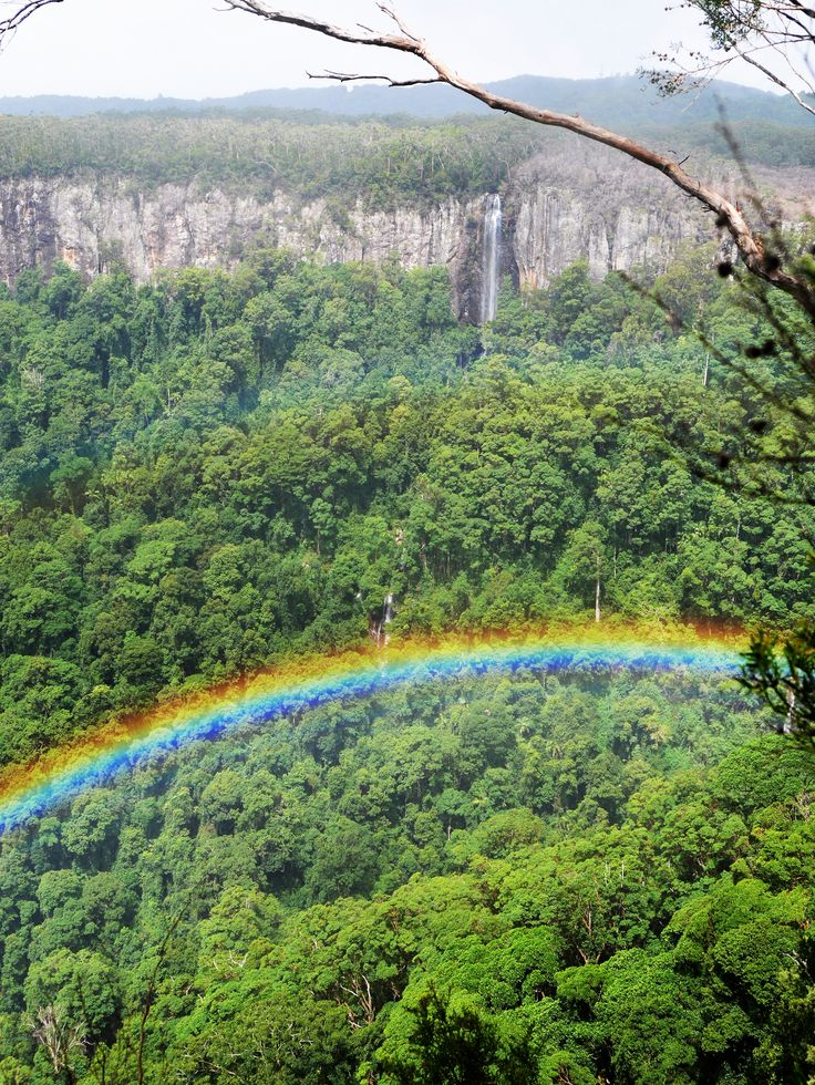 Rainbow in the valley - from Canyon Lookout at Springbrook