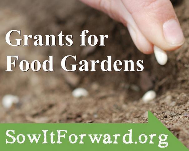 The Sow It Forward Garden Grants Program   Kitchen Gardeners International