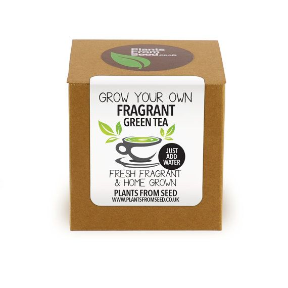 Grow Your Own Fragrant Green Tea Plant Kit by PlantsFromSeed