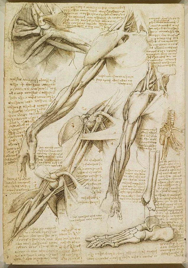 19 best da vinci images on Pinterest | Anatomie, Menschliche ...