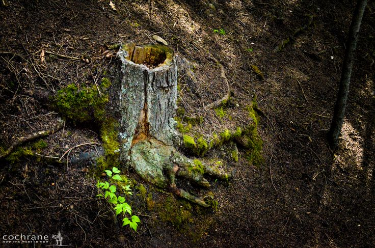 Charming old stump!