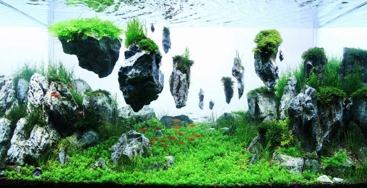こんな世界見たことある?異次元のレベルに到達してる水草水槽 | ぷらすぶろぐ