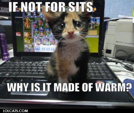 Aww kitty!