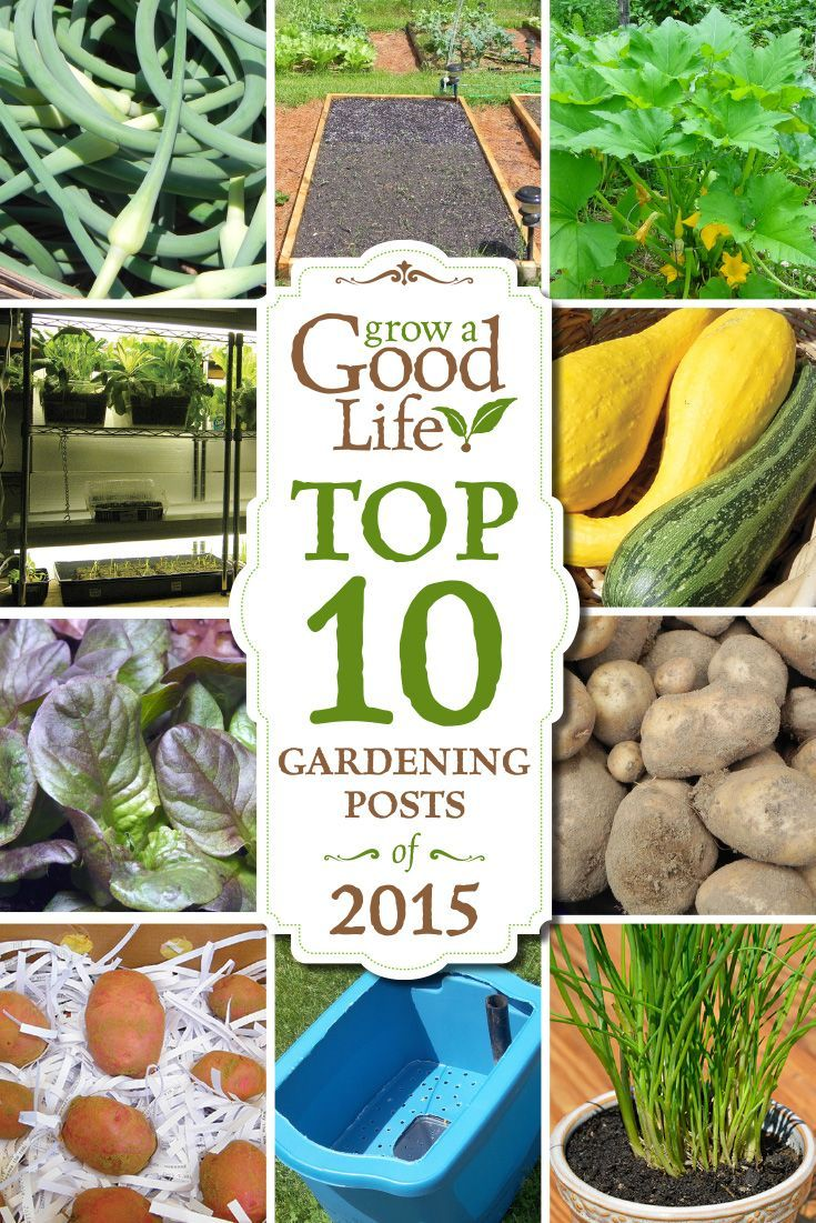 Top 10 Gardening Posts of 2015 | Gardens, Vegetable garden