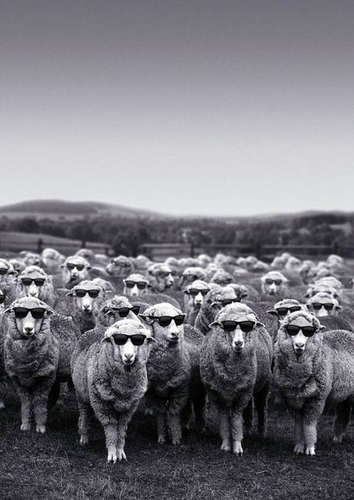welsh sheep waiting for the sun to come out .... enjoy the wait