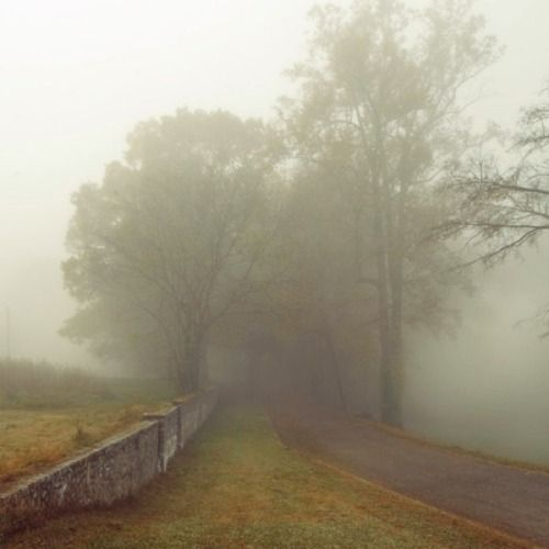 foggy morning...Ghosts Stories, Foggy Roads, Walks, Favorite Places, Country Roads, Mists, Foggy Mornings, Misty, Beautiful Things