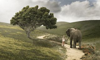 Baby Elephant Walk | da ShutterJack