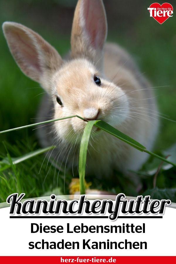 Vorsicht Bei Der Kaninchenfutterung So Machst Du Dein Kaninchen Ungewollt Krank Kaninchen Kaninchen Futtern Kaninchen Aussengehege