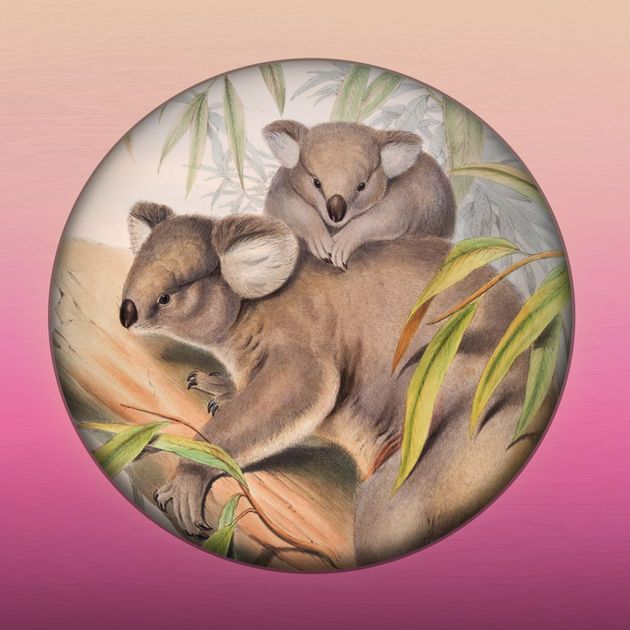 APP > Field Guide to QLD Fauna (Apple)
