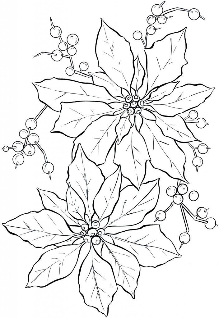 poinsettia line art - Coloring Stencils