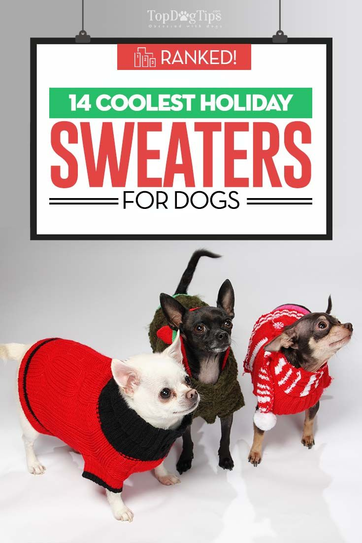 39 best Best Dog Clothes images on Pinterest