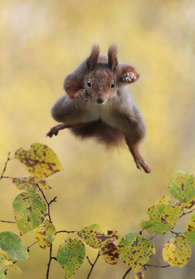 Kungfu Squirrel by Julian Rad on 500px