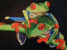 frogs - Google Search.