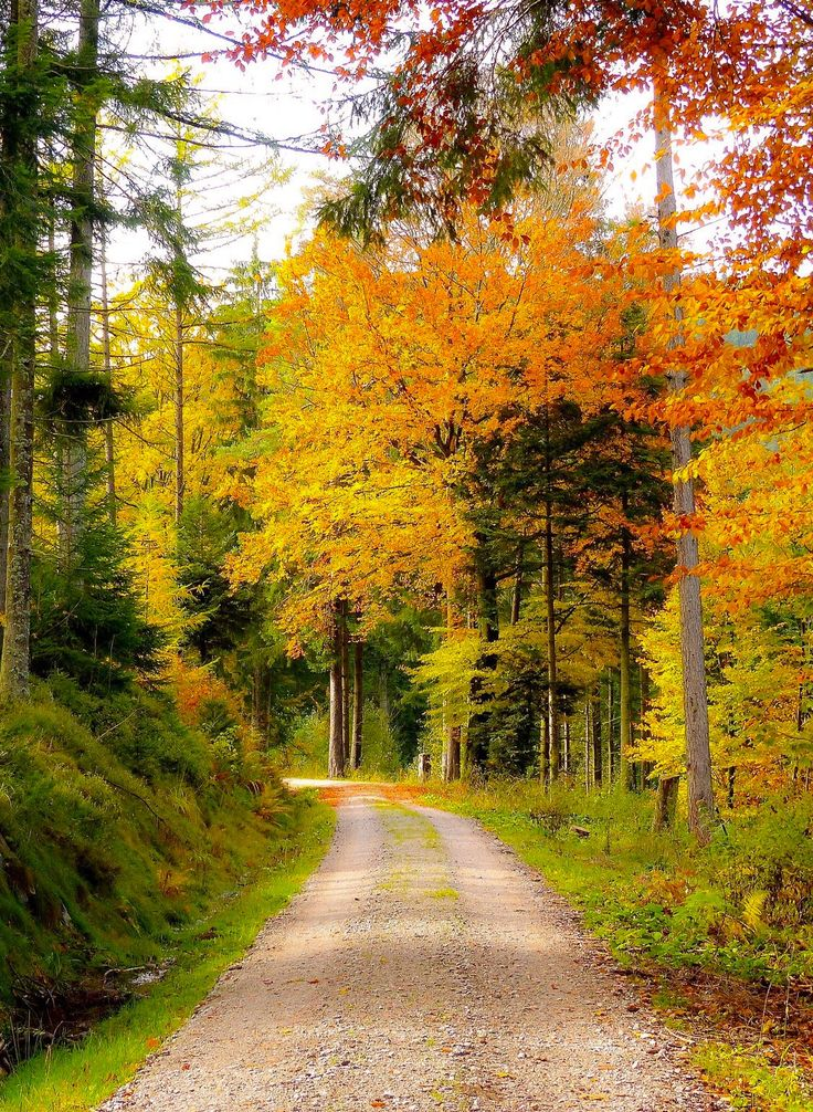 Black Forest road (Germany) by Roman Boed