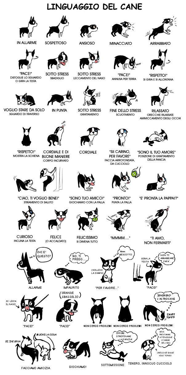 il linguaggio del cane