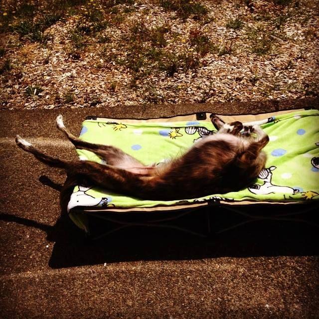 Sun bathing.