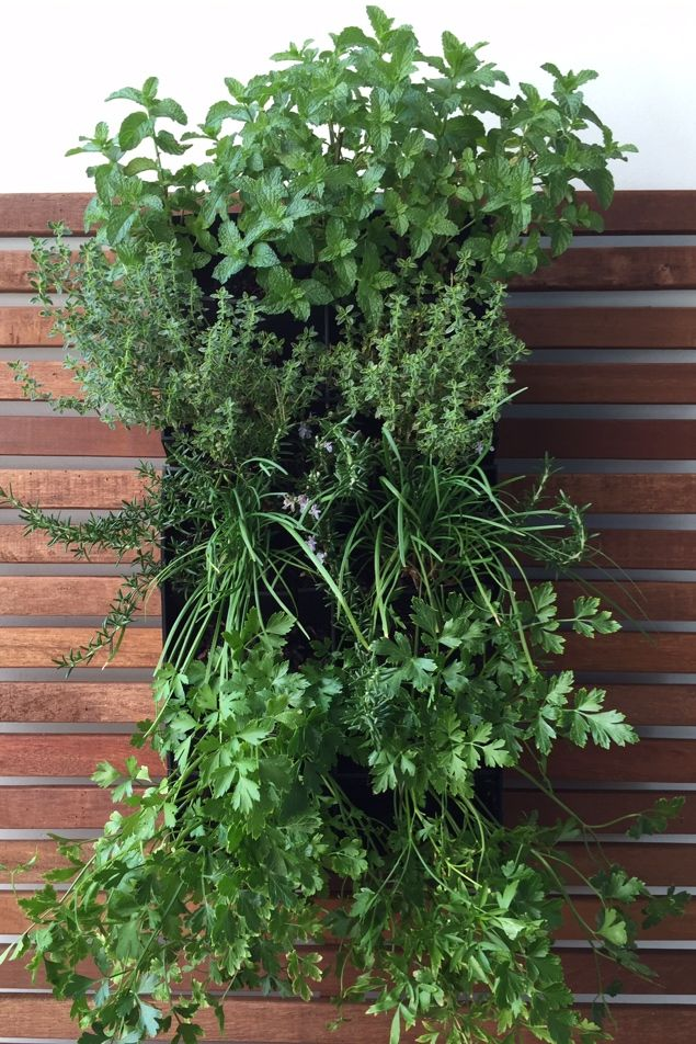 Fresh herbs just outside your kitchen door! Want one?  Visit www.lusciouslivingspaces.com.au to order or more info Created by Luscious Living Spaces using our neat, compact and smart HG1 living wall module system! Mint, Thyme, Rosemary, Chives, Parsley and much more can be planted and grown in this system. HG1 is so easy to install and harvest fresh herbs! Melbourne Australia